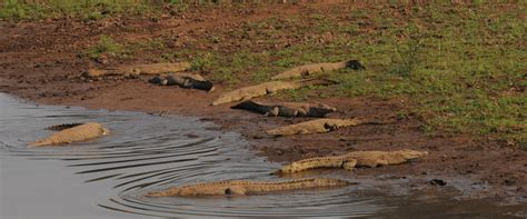 New places to explore Pafuri from   Great Limpopo