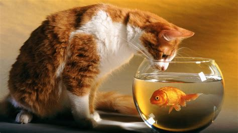 Cat and Fish Wallpapers | HD Wallpapers | ID #10817