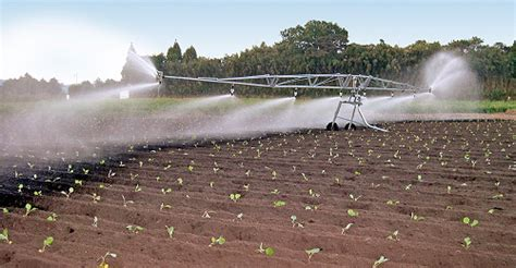 Bauer: Compact irrigation reels set new standards   What's