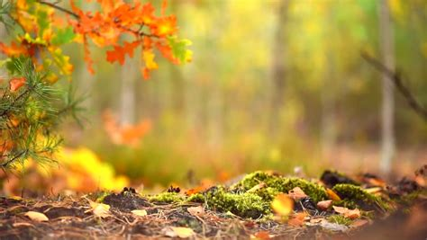 Stock video of autumn sunny forest background