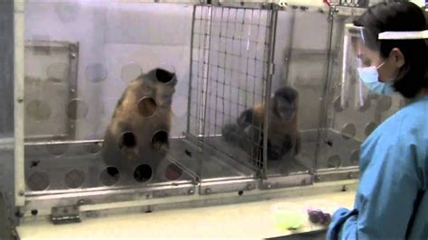 Two Monkeys Were Paid Unequally: Excerpt from Frans de