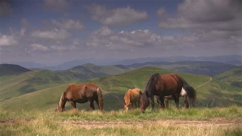 Stock Video Clip of Horses grazing on mountain meadow