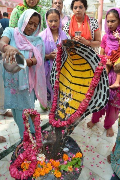 In pictures: Nag Panchami 2017, or the Hindu snake festival