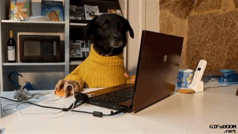 We Bet You've Done these Weird Things at Work | Dogs