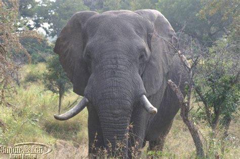 Kruger National Park   Simon and Baker Travel Review, Inc